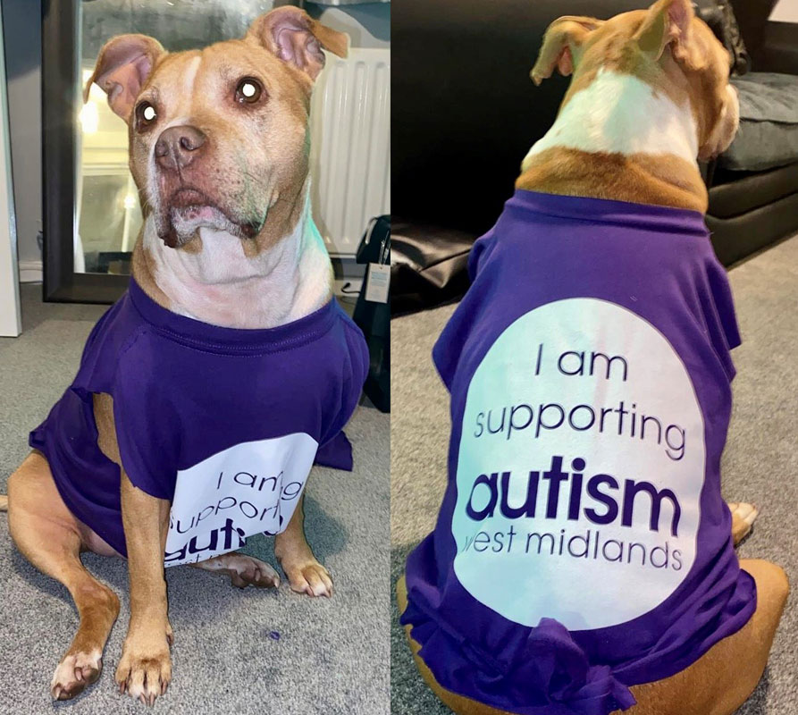 Dog with a fundraising t-shirt on